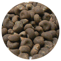 Ambrette Seeds