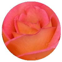 Fantasia Rose